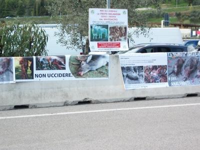presidio riva del garda davanti alla fiera della caccia e della pesca   31032012 20120401 2074374927 960x300 - Presidio alla Fiera Caccia e Pesca di Riva del Garda 31.03.2012 - 2012-
