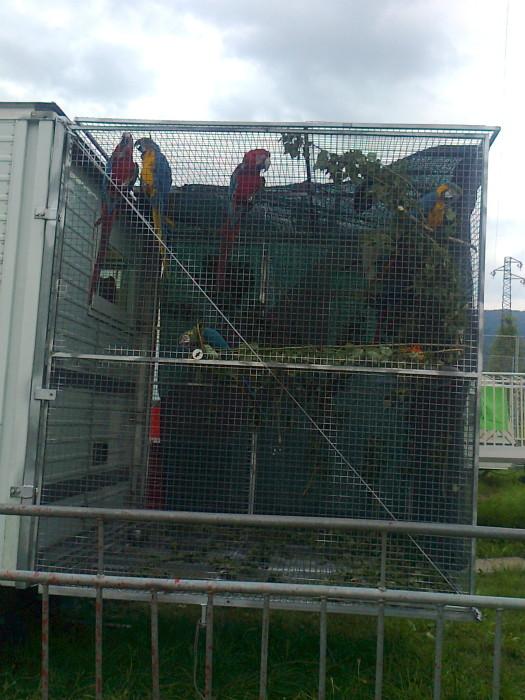 secondo preisidio circo orfei 20110626 1583048541 - Presidio circo Orfei - Pergine Valsugana 24.06.2011 - 2011-