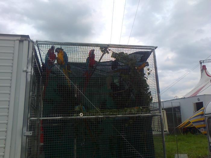 secondo preisidio circo orfei 20110626 1675045937 - Presidio circo Orfei - Pergine Valsugana 24.06.2011 - 2011-