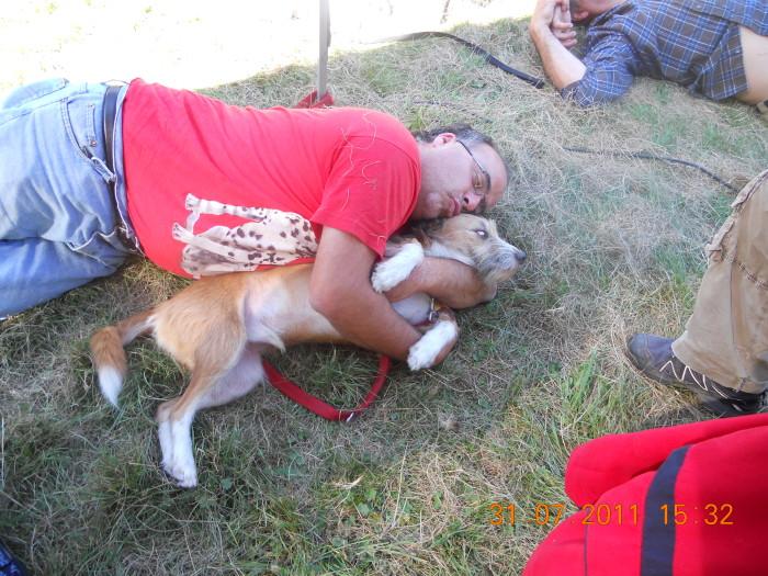 tavoli animal 20130212 1086836542 - FESTA DELLE ASSOCIAZIONI - LOC. 7 LARICI - COREDO (TN) - 31.07.2011