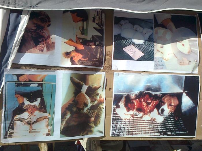 tavolo informativo suglio orrori della vivisez 20130212 1186536256 - TRENTO - 03.03.2012 - TAVOLO INFORMATIVO SUGLI ORRORI DELLA VIVISEZIONE