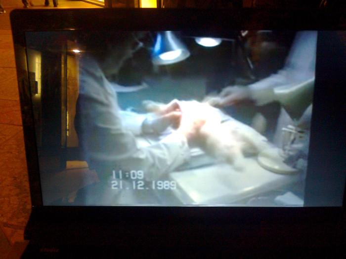 tavolo informativo suglio orrori della vivisezione 20120304 1077257488 - TRENTO - 03.03.2012 - TAVOLO INFORMATIVO SUGLI ORRORI DELLA VIVISEZIONE