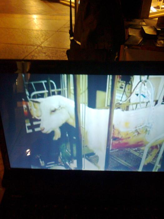 tavolo informativo suglio orrori della vivisezione 20120304 1092579185 - TRENTO - 03.03.2012 - TAVOLO INFORMATIVO SUGLI ORRORI DELLA VIVISEZIONE
