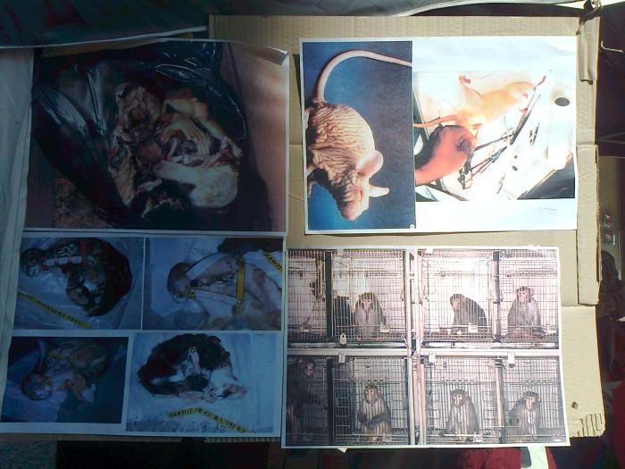 tavolo informativo suglio orrori della vivisezione 20120304 1238291016 - TRENTO - 03.03.2012 - TAVOLO INFORMATIVO SUGLI ORRORI DELLA VIVISEZIONE