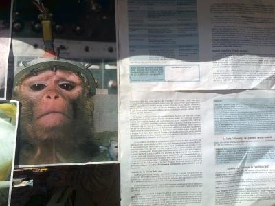 tavolo informativo suglio orrori della vivisezione 20120304 1258995851 960x300 - TRENTO - 03.03.2012 - TAVOLO INFORMATIVO SUGLI ORRORI DELLA VIVISEZIONE
