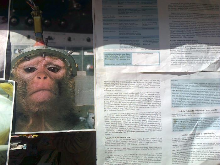 tavolo informativo suglio orrori della vivisezione 20120304 1258995851 - TRENTO - 03.03.2012 - TAVOLO INFORMATIVO SUGLI ORRORI DELLA VIVISEZIONE