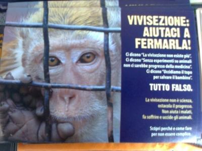 tavolo informativo suglio orrori della vivisezione 20120304 1422592893 960x300 - TRENTO - 03.03.2012 - TAVOLO INFORMATIVO SUGLI ORRORI DELLA VIVISEZIONE