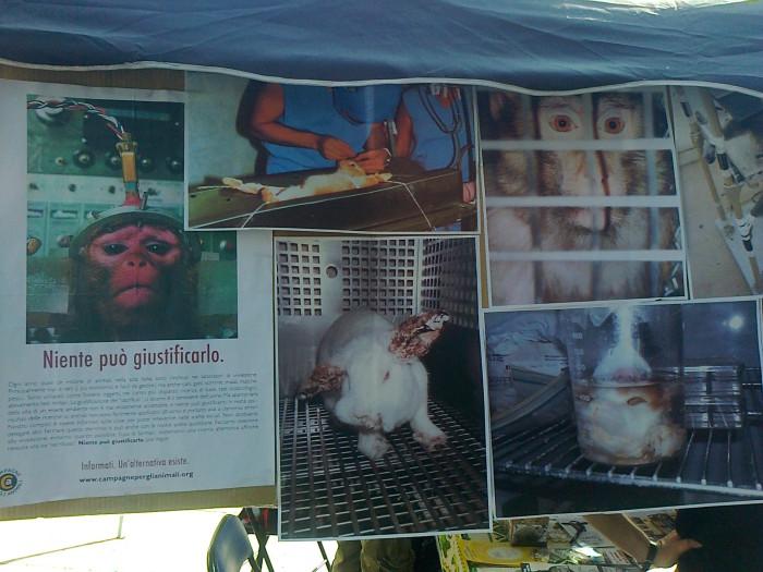 tavolo informativo suglio orrori della vivisezione 20120304 1510594867 - TRENTO - 03.03.2012 - TAVOLO INFORMATIVO SUGLI ORRORI DELLA VIVISEZIONE
