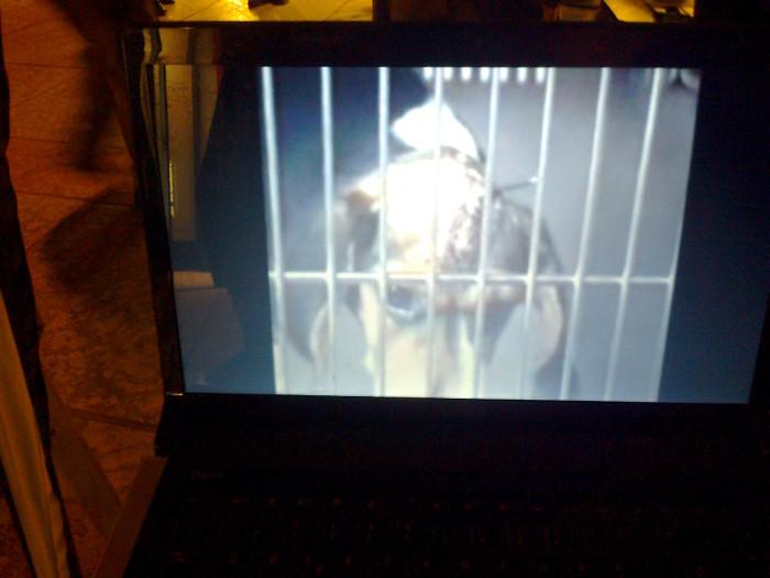 tavolo informativo suglio orrori della vivisezione 20120304 1605331436 - TRENTO - 03.03.2012 - TAVOLO INFORMATIVO SUGLI ORRORI DELLA VIVISEZIONE