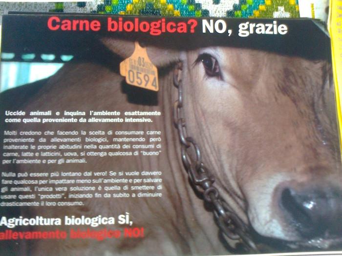 tavolo informativo suglio orrori della vivisezione 20120304 1817892804 - TRENTO - 03.03.2012 - TAVOLO INFORMATIVO SUGLI ORRORI DELLA VIVISEZIONE