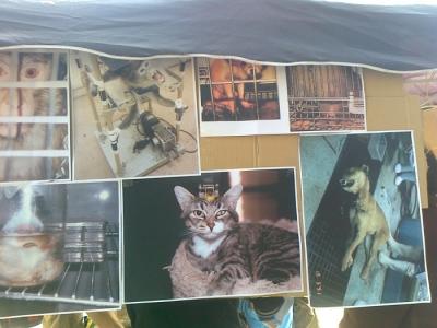 tavolo informativo suglio orrori della vivisezione 20120304 1823451676 960x300 - TRENTO - 03.03.2012 - TAVOLO INFORMATIVO SUGLI ORRORI DELLA VIVISEZIONE