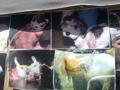 tavolo informativo suglio orrori della vivisezione 20120304 1828073166 960x300 - TRENTO - 03.03.2012 - TAVOLO INFORMATIVO SUGLI ORRORI DELLA VIVISEZIONE