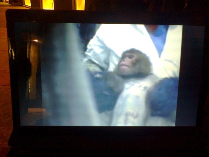 tavolo informativo suglio orrori della vivisezione 20120304 1925165985 - TRENTO - 03.03.2012 - TAVOLO INFORMATIVO SUGLI ORRORI DELLA VIVISEZIONE