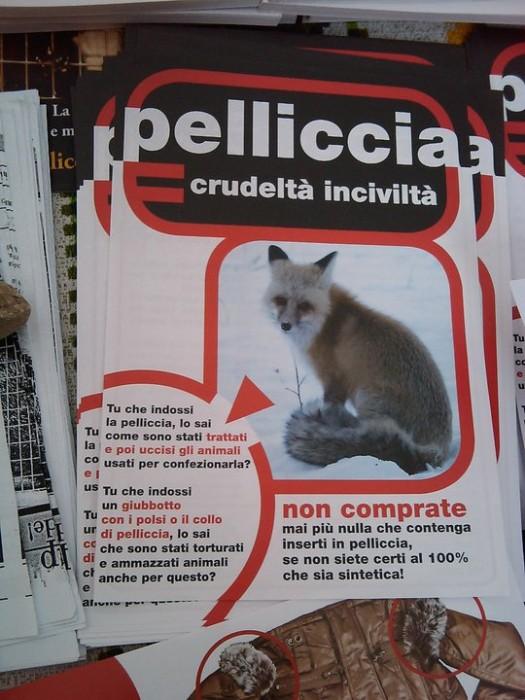 tavolo informativo trento pellicce 20110228 1727221385 - TAVOLO INFORMATIVO SULLE PELLICCE - TRENTO 26.02.2011 - 2011-