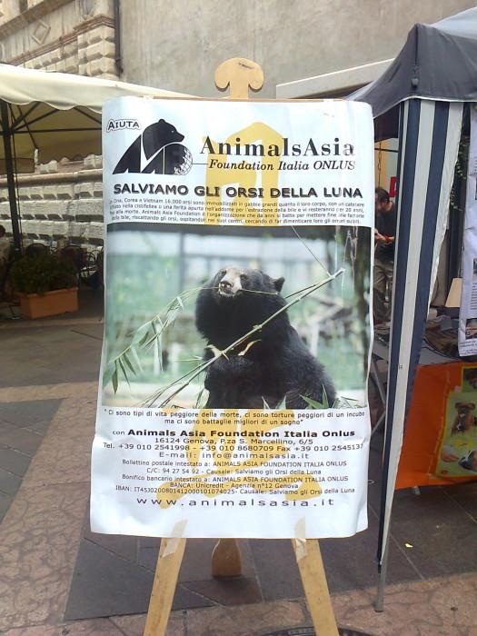 tavolo per gli orsi delle fattorie della  20130212 1930733603 - TAVOLO ANIMALS ASIA DEL 16.07.2011