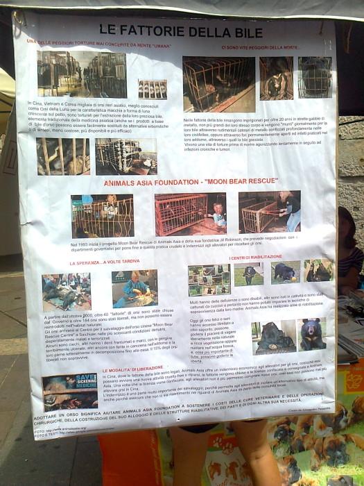 tavolo per gli orsi delle fattorie della bile 20110717 1236713773 - TAVOLO ANIMALS ASIA DEL 16.07.2011