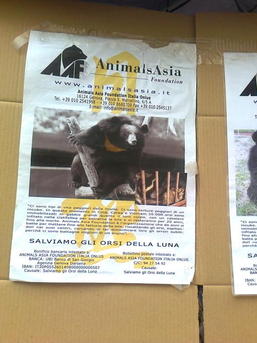 tavolo per gli orsi delle fattorie della bile 20110717 1244312344 - TAVOLO ANIMALS ASIA DEL 16.07.2011