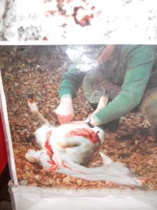 trento 03 dicembre fiacco 20130212 1388890089 960x300 - 03 dicembre 2011 Trento fiaccolata per denunciare lo sterminio degli animali nel periodo natalizio (e non solo!)