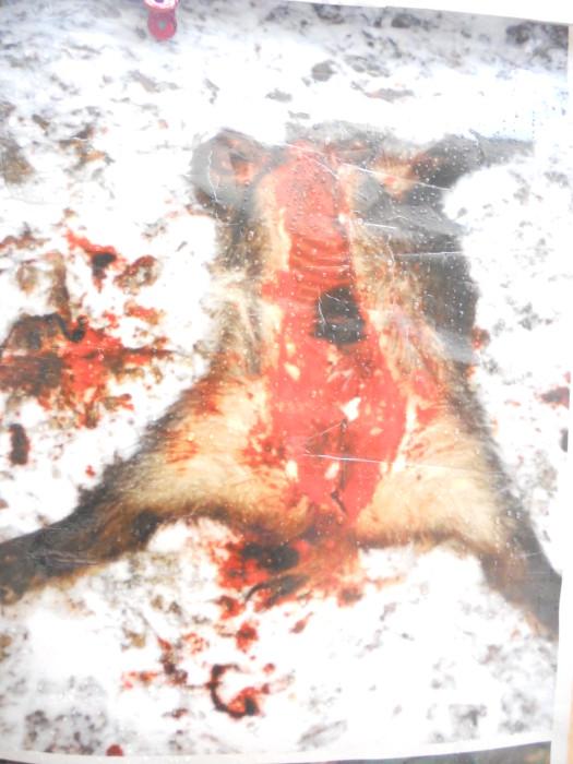 trento 03 dicembre fiacco 20130212 1909496443 - 03 dicembre 2011 Trento fiaccolata per denunciare lo sterminio degli animali nel periodo natalizio (e non solo!)