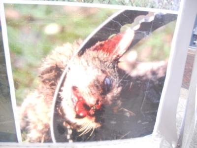 trento 03 dicembre fiacco 20130212 2099018109 960x300 - 03 dicembre 2011 Trento fiaccolata per denunciare lo sterminio degli animali nel periodo natalizio (e non solo!)