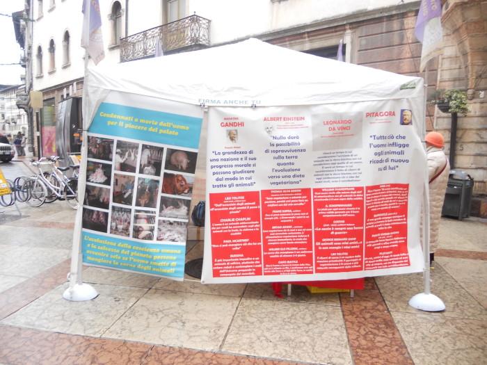 trento 03 dicembre fiaccolata 20111203 1155313193 - 03 dicembre 2011 Trento fiaccolata per denunciare lo sterminio degli animali nel periodo natalizio (e non solo!)