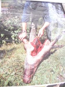 trento 03 dicembre fiaccolata 20111203 1740429385 960x300 - 03 dicembre 2011 Trento fiaccolata per denunciare lo sterminio degli animali nel periodo natalizio (e non solo!) - 2011-