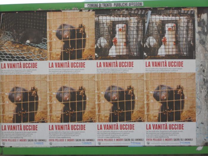 trento campagna contro le pelli 20130212 1006279146 - Campagna contro le pellicce - Trento dicembre 2012 - 2012-