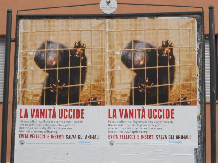 trento campagna contro le pelli 20130212 1164343603 - Campagna contro le pellicce - Trento dicembre 2012 - 2012-