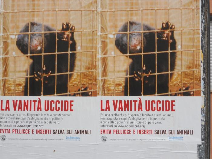 trento campagna contro le pelli 20130212 1195788675 - Campagna contro le pellicce - Trento dicembre 2012 - 2012-