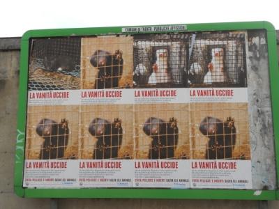 trento campagna contro le pelli 20130212 1910638319 960x300 - Campagna contro le pellicce - Trento dicembre 2012 - 2012-