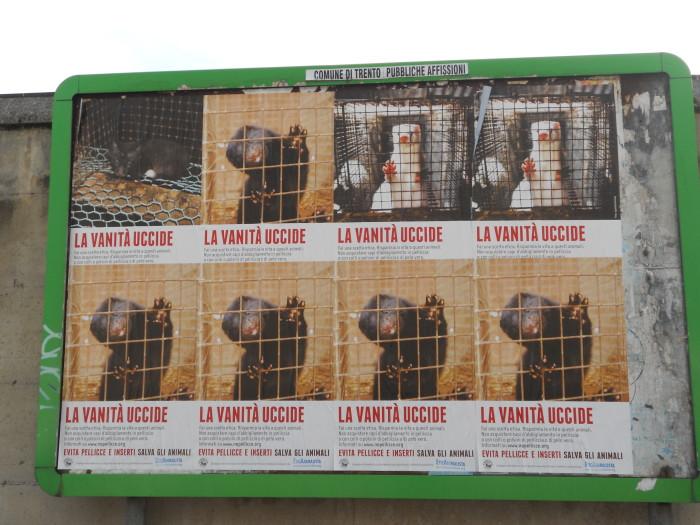 trento campagna contro le pelli 20130212 1910638319 - Campagna contro le pellicce - Trento dicembre 2012 - 2012-