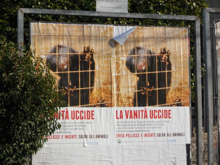 trento campagna contro le pelliccie 20130101 1144861989 - Campagna contro le pellicce - Trento dicembre 2012 - 2012-