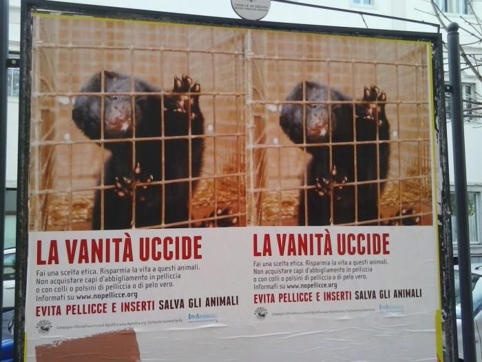 trento dicembre  20130212 1089020268 - Campagna contro le pellicce - Trento dicembre 2012 - 2012-