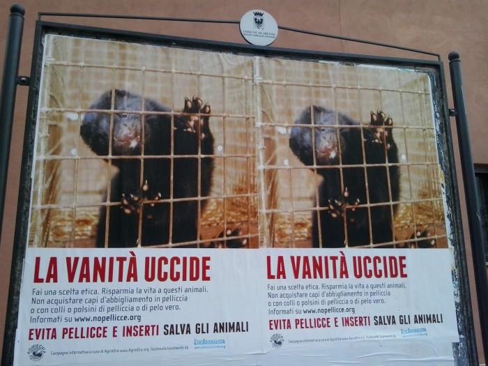 trento dicembre  20130212 1600999636 - Campagna contro le pellicce - Trento dicembre 2012 - 2012-