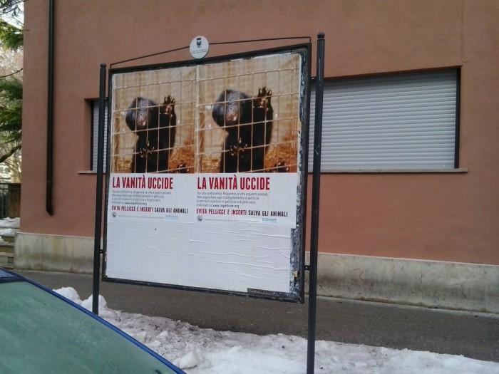 trento dicembre  20130212 1613364071 - Campagna contro le pellicce - Trento dicembre 2012 - 2012-