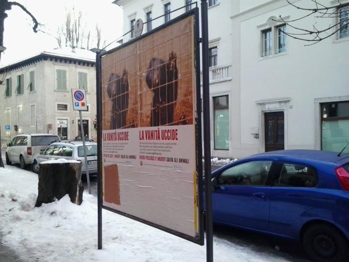 trento dicembre  20130212 2002405605 - Campagna contro le pellicce - Trento dicembre 2012 - 2012-