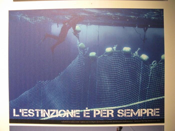 trento veg   16 settembre  20130212 1151443329 - TRENTO VEG 2012 - 2012-
