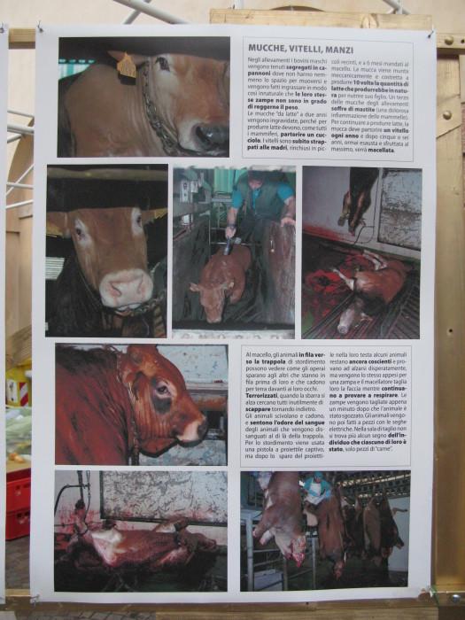 trento veg   16 settembre  20130212 1374163907 - TRENTO VEG 2012 - 2012-