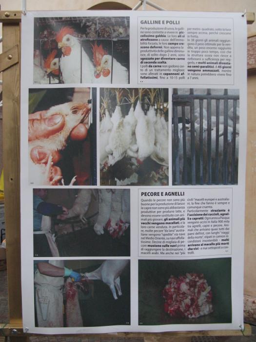 trento veg   16 settembre  20130212 1661745157 - TRENTO VEG 2012 - 2012-