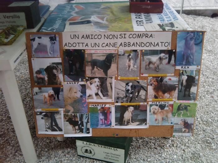 vegan fest 2011   camaiore 20110427 1135071763 - VEGAN FEST 2011- 22/25 APRILE - CAMARIORE