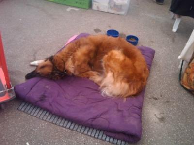 vegan fest 2011   camaiore 20110427 1146828472 960x300 - VEGAN FEST 2011- 22/25 APRILE - CAMARIORE