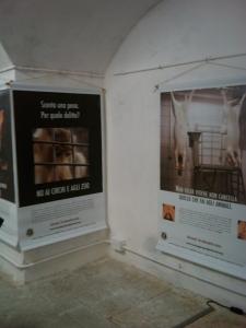 vegan fest 2011   camaiore 20110427 1224385299 960x300 - VEGAN FEST 2011- 22/25 APRILE - CAMARIORE