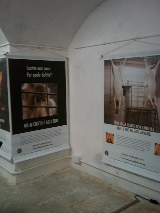 vegan fest 2011   camaiore 20110427 1224385299 - VEGAN FEST 2011- 22/25 APRILE - CAMARIORE