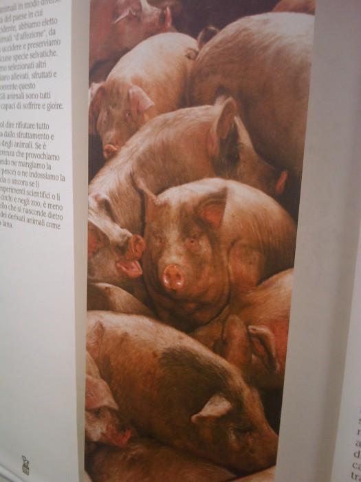 vegan fest 2011   camaiore 20110427 1250796576 - VEGAN FEST 2011- 22/25 APRILE - CAMARIORE