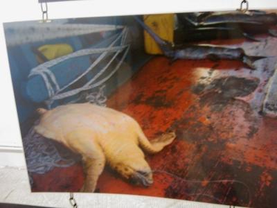 vegan fest 2011   camaiore 20110427 1317753590 960x300 - VEGAN FEST 2011- 22/25 APRILE - CAMARIORE