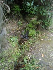 vegan fest 2011   camaiore 20110427 1400000951 960x300 - VEGAN FEST 2011- 22/25 APRILE - CAMARIORE
