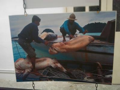 vegan fest 2011   camaiore 20110427 1559377654 960x300 - VEGAN FEST 2011- 22/25 APRILE - CAMARIORE
