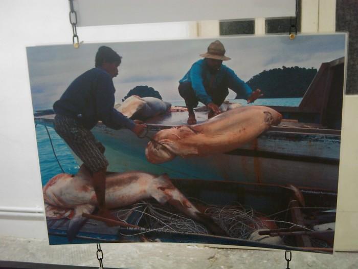 vegan fest 2011   camaiore 20110427 1559377654 - VEGAN FEST 2011- 22/25 APRILE - CAMARIORE