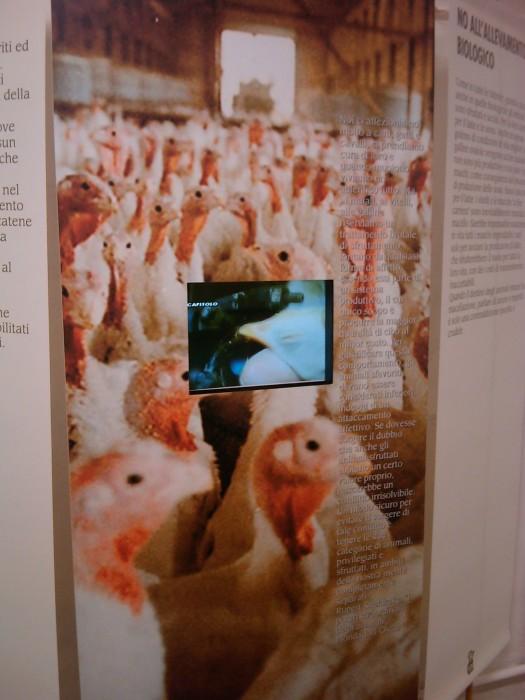 vegan fest 2011   camaiore 20110427 1655270959 - VEGAN FEST 2011- 22/25 APRILE - CAMARIORE