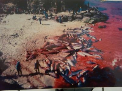 vegan fest 2011   camaiore 20110427 1663995570 960x300 - VEGAN FEST 2011- 22/25 APRILE - CAMARIORE